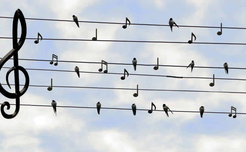 ציפור על עץ תווים למידה מוזיקה גיטרה מפתח סול אקורד